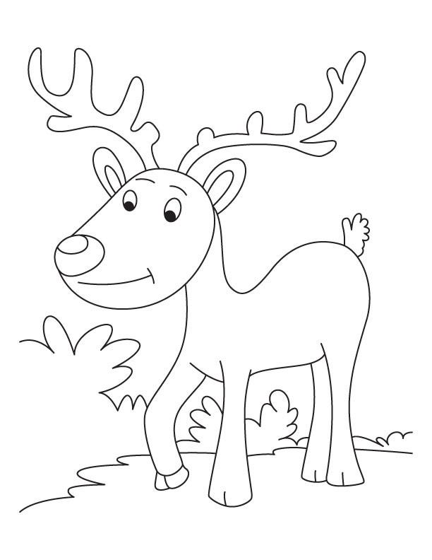 Coloriage et dessins gratuits Caribou se promène à imprimer