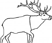 Coloriage et dessins gratuit Caribou simple à imprimer