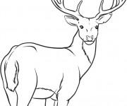 Coloriage Caribou te regarde