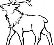 Coloriage et dessins gratuit L'animal de Caribou à imprimer
