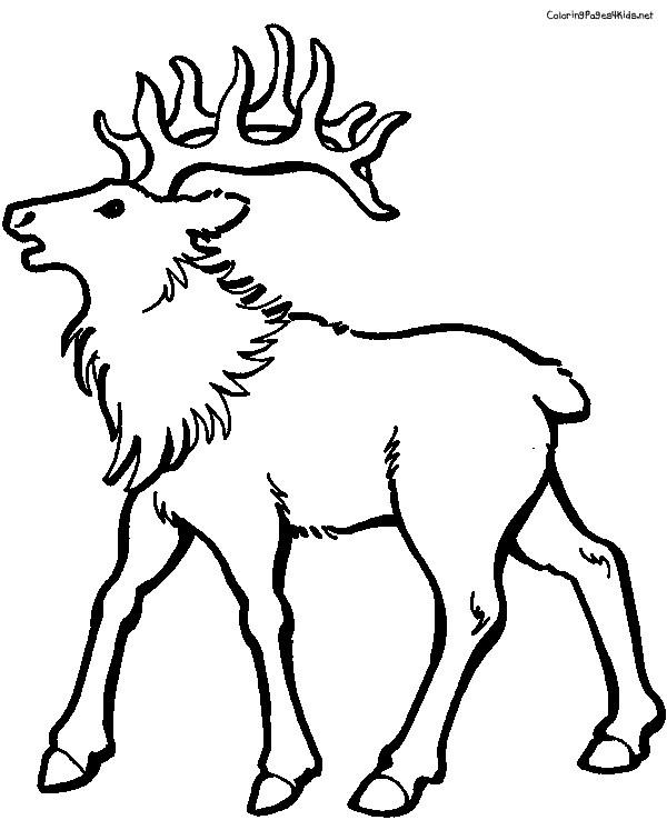 Coloriage et dessins gratuits L'animal de Caribou à imprimer