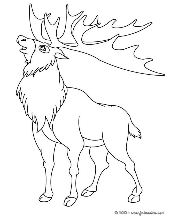Coloriage et dessins gratuits Le Caribou d'Amérique à imprimer