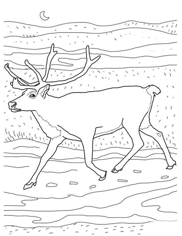 Coloriage et dessins gratuits Le Renne en plein air à imprimer