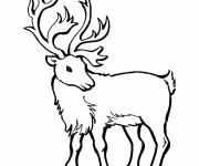 Coloriage Portrait d'un Caribou