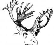 Coloriage et dessins gratuit Tête de Caribou à imprimer