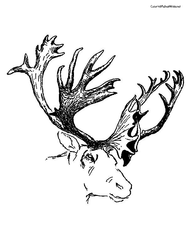 Coloriage t te de caribou dessin gratuit imprimer - Dessiner un cerf ...