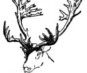 Coloriage et dessins gratuit Tête de Caribou couleur à imprimer