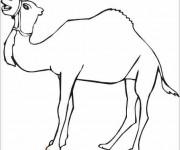 Coloriage dessin  Chameau 11