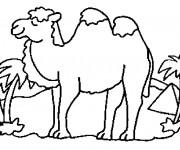 Coloriage chameau 13 gratuit imprimer en ligne - Dessiner un chameau ...