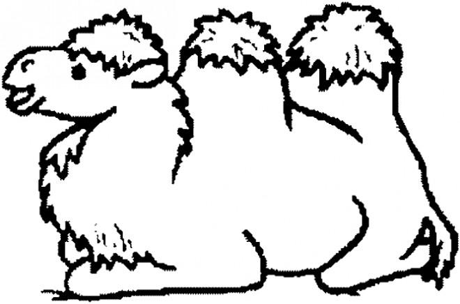 Coloriage chameau assis dessin gratuit imprimer - Dessin de chameau ...