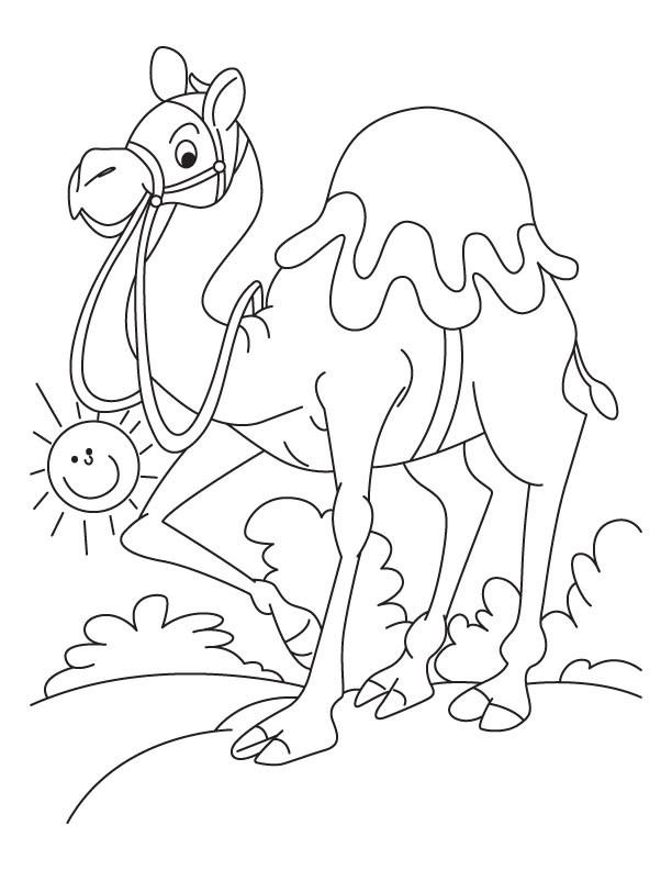 Coloriage et dessins gratuits Chameau dans la nature à imprimer