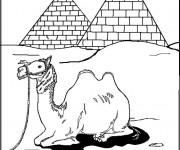 Coloriage Chameau devant les pyramides