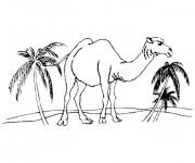 Coloriage Chameau et palmier
