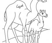 Coloriage Chameau et son petit