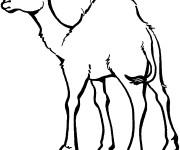 Coloriage et dessins gratuit Chameau facile à imprimer