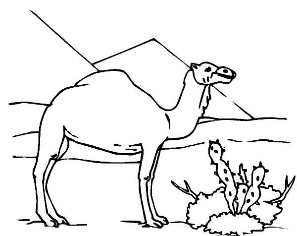 Coloriage dromadaire image dessin gratuit imprimer - Dessiner un chameau ...