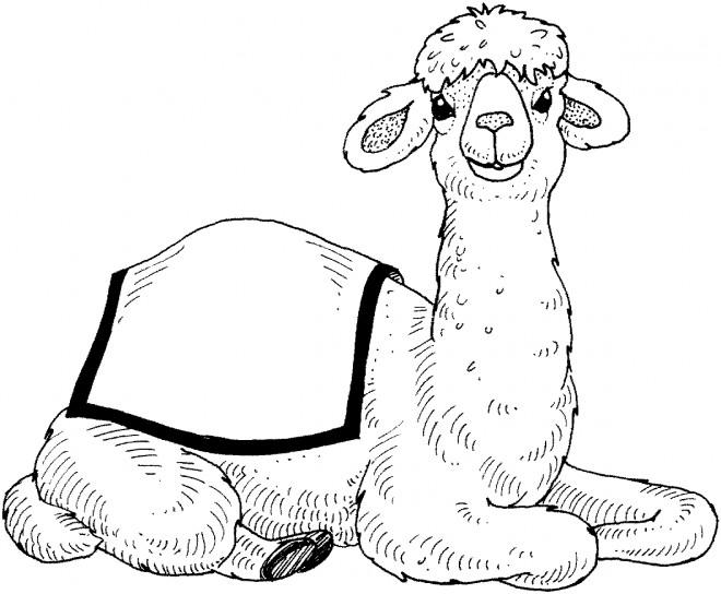 Coloriage le petit du chameau dessin gratuit imprimer - Dessiner un chameau ...