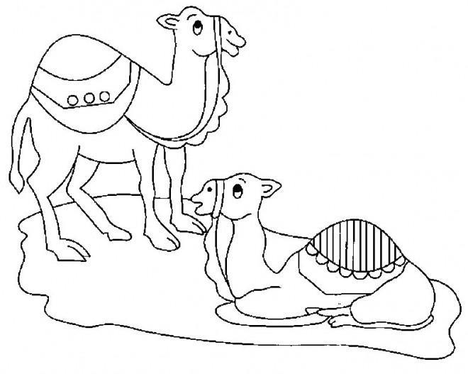 Coloriage le repos des chameaux dessin gratuit imprimer - Dessiner un chameau ...
