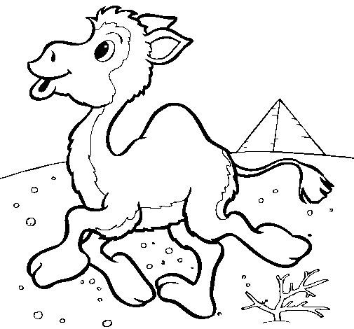 Coloriage et dessins gratuits Petit chameau d'Egypte à imprimer