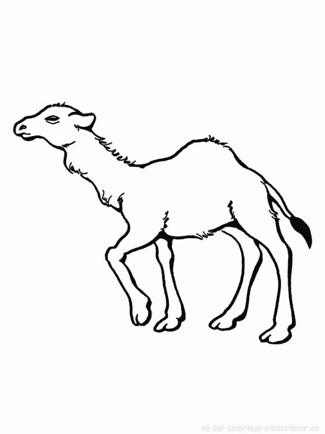 Coloriage petit dromadaire dessin gratuit imprimer - Dessiner un chameau ...