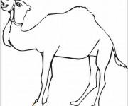 Coloriage et dessins gratuit Un Chameau orientale à imprimer