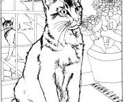 Coloriage Chat à la maison