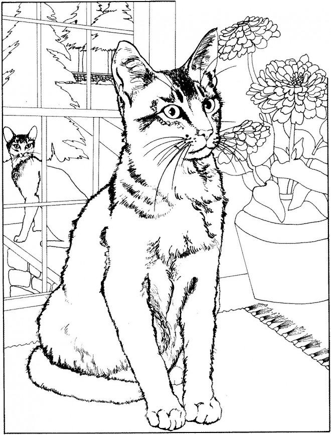 Coloriage et dessins gratuits Chat à la maison à imprimer