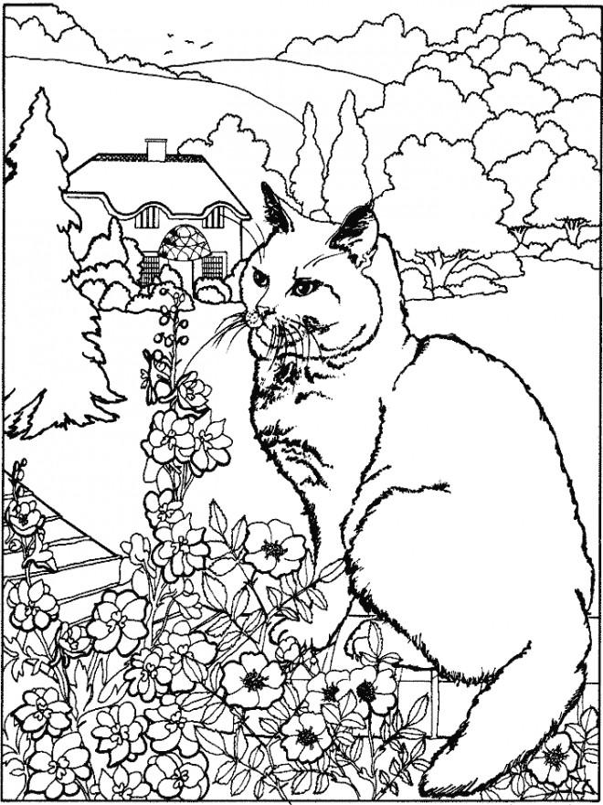 Coloriage et dessins gratuits Chat dans le jardin de la maison à imprimer
