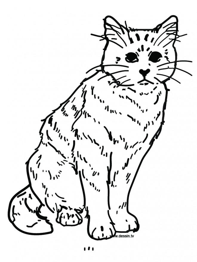 Coloriage et dessins gratuits Chat dessin à imprimer