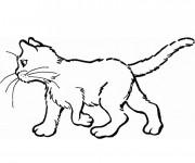 Coloriage et dessins gratuit Chat en couleur à imprimer