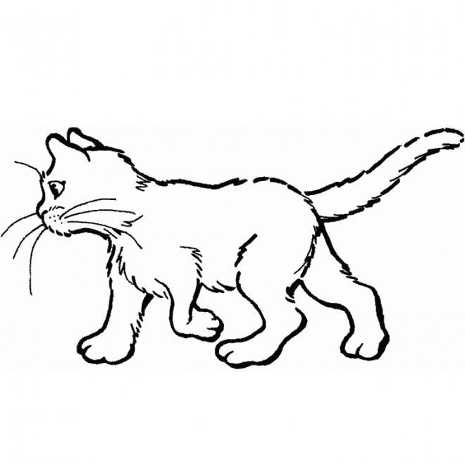 Coloriage chat en couleur dessin gratuit imprimer - Chat facile et gratuit ...