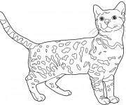 Coloriage Chat Leopard du Bengale