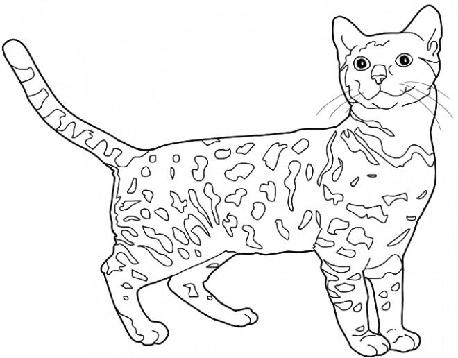 Coloriage chat leopard du bengale dessin gratuit imprimer - Coloriage en ligne chat ...