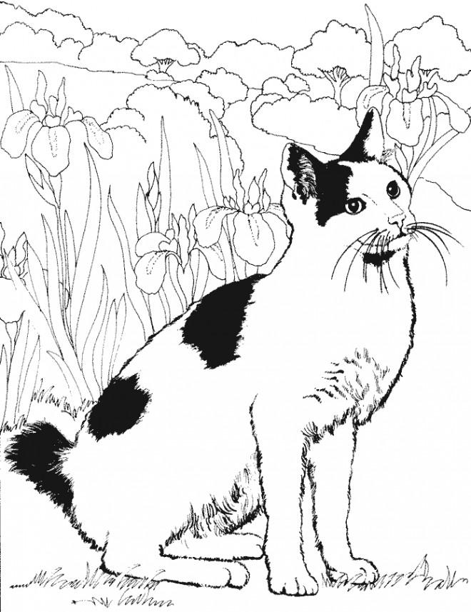 Coloriage Chat Noir Et Blanc Dessin Gratuit A Imprimer