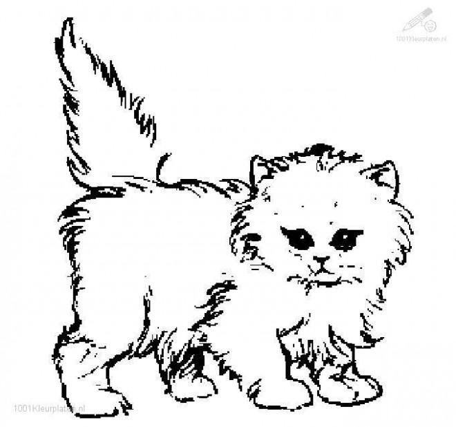 Coloriage et dessins gratuits Chat Russe à imprimer