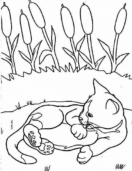 Coloriage et dessins gratuits Chat se nettoie à imprimer