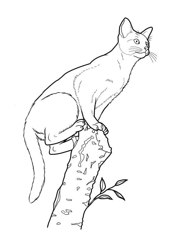 Coloriage et dessins gratuits Chat sur la branche d'arbre à imprimer