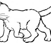Coloriage et dessins gratuit Chaton en ligne à imprimer
