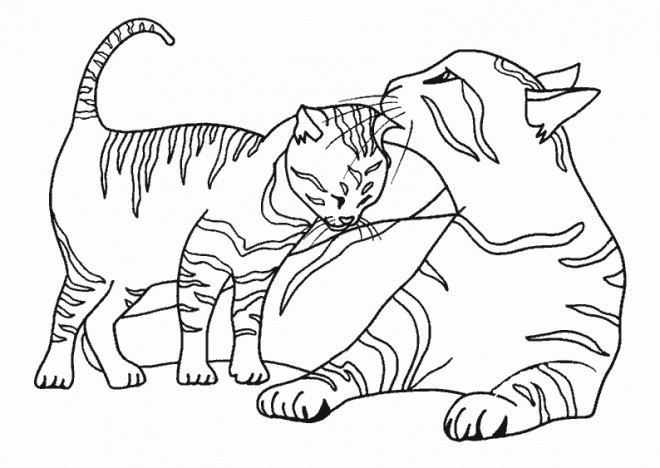 Coloriages De Chat A Imprimer