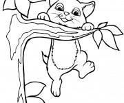 Coloriage Chatons joue sur l'arbre
