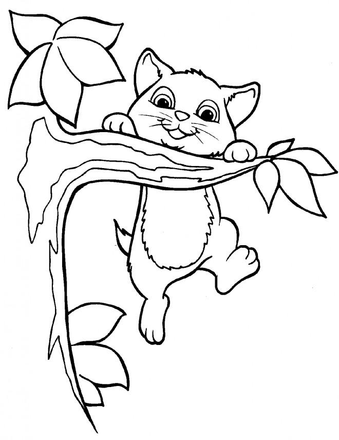 Coloriage chatons joue sur l 39 arbre dessin gratuit imprimer - Coloriage chaton a imprimer gratuit ...