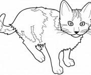 Coloriage et dessins gratuit Dessin d'un Chat à imprimer