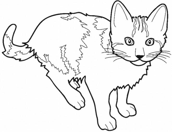 Coloriage dessin d 39 un chat dessin gratuit imprimer - Dessins de chats ...