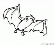 Coloriage et dessins gratuit Chauve-souris dessin à imprimer