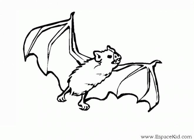 Coloriage et dessins gratuits Chauve-souris dessin à imprimer