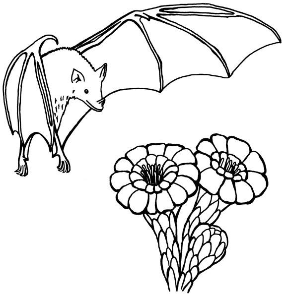 Coloriage et dessins gratuits Chauve-souris et les fleurs à imprimer