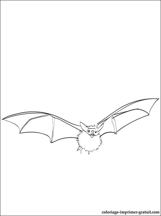 Coloriage et dessins gratuits Chauve-souris qui vole à imprimer
