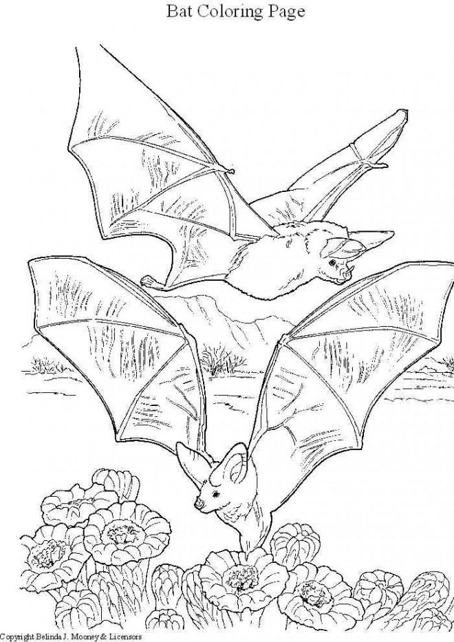 Coloriage et dessins gratuits Chauves-souris au crayon à imprimer