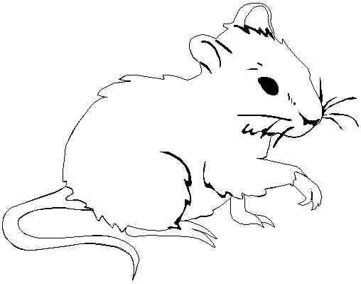 Coloriage et dessins gratuits Une souris à imprimer