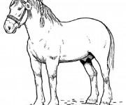 Coloriage dessin  Cheval 11